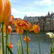 SDN NFV Hague Conference / Binnenhof with tulips